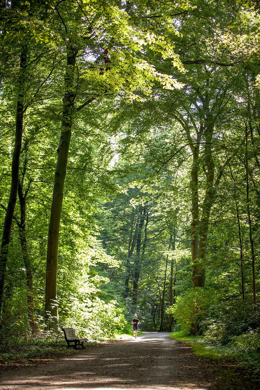 Die Eilenriede ist Hannovers grüne Lunge und ein Entspannungsort mitten in der Großstadt.