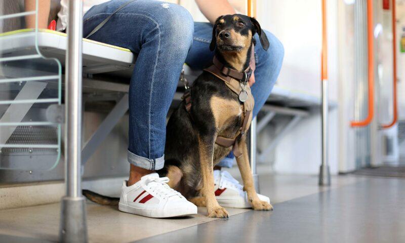 Ein Hund in der Bahn: Auf vier Pfoten sicher unterwegs